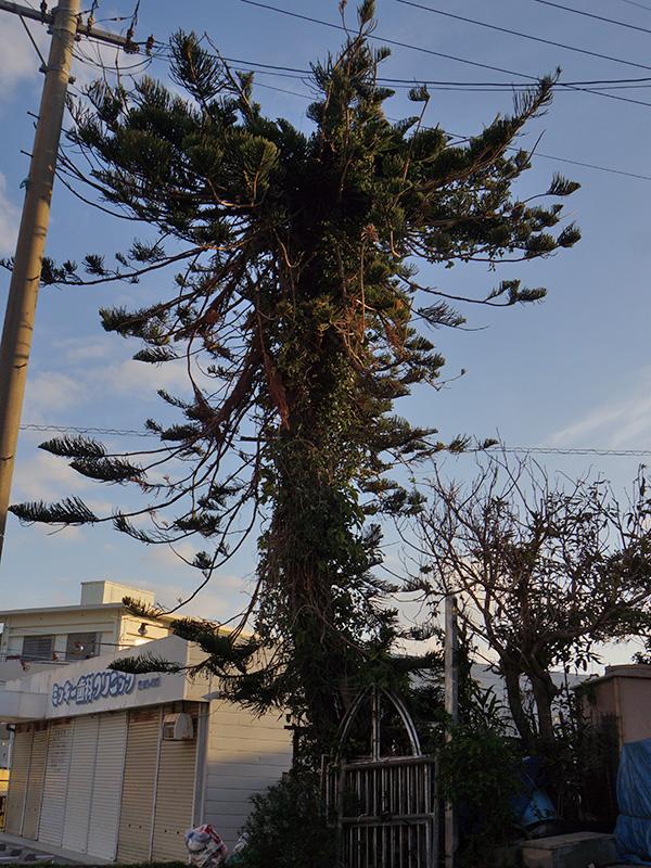 strange_tree130201
